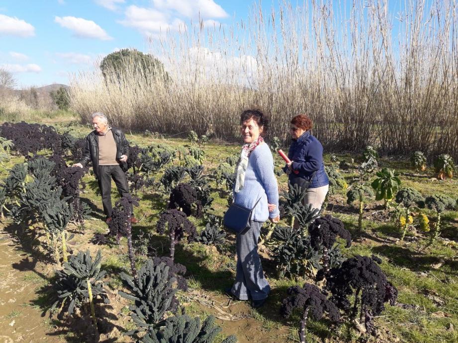 Trois amapiens et habitués des champs de légumes du jardin de la Piboule.