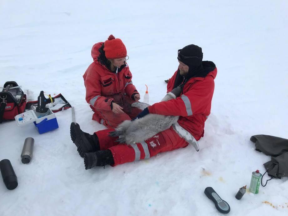 Au sein de la station scientifique allemande, les chercheurs du Centre scientifique de Monaco font des études sur les manchots pour comprendre l'évolution des écosystèmes polaires. (DR)