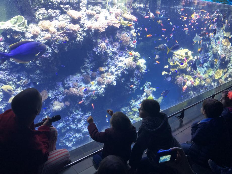 Les enfants observent le lagon à requins toujours avec le même émerveillement.