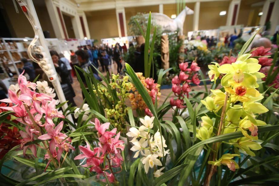 Au Palais de l'Europe, entre les stands du festival, se dressent des dizaines d'orchidées.
