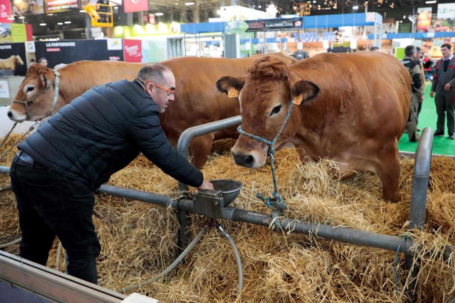 A farmer looks after his cattle, on February 22, 2019, on the eve of the opening of the International Agriculture Fair (Salon de l'Agriculture) at the Porte de Versailles exhibition centre in Paris. (Photo by Ludovic MARIN / AFP)