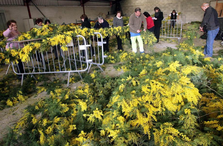 La fête du mimosa, c'est dimanche à Biot.