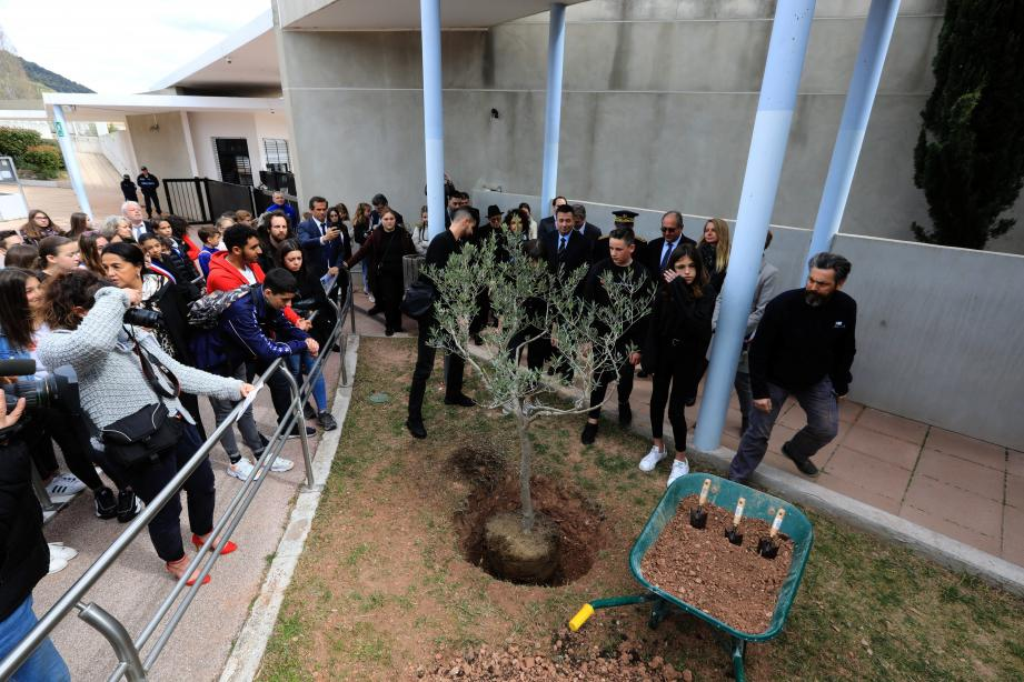 Un olivier sera planté dans tous les collèges du Var.