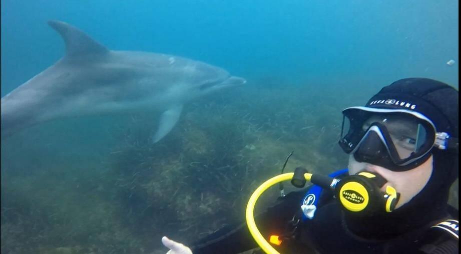 Des plongeurs de Nice ont pu ramener des images magnifiques du dauphin qui parade sur le littoral depuis la semaine dernière.