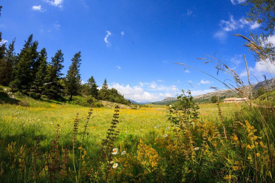 En raison de la double influence climatique méditerranéenne et montagnarde, le parc abrite des paysages diversifiés : rocailles et landes arides, vallées, gorges et clues, espaces forestiers et plaines cultivées ou pâturées.