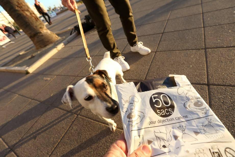 Les déjections canines représentent le principal problème de propreté du quartier.