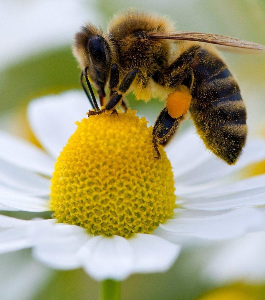Le déjeuner de l'abeille varoise.