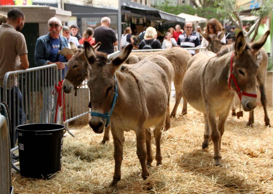 Les ânes, tous plus mignons les uns que les autres, ont monopolisé l'attention.
