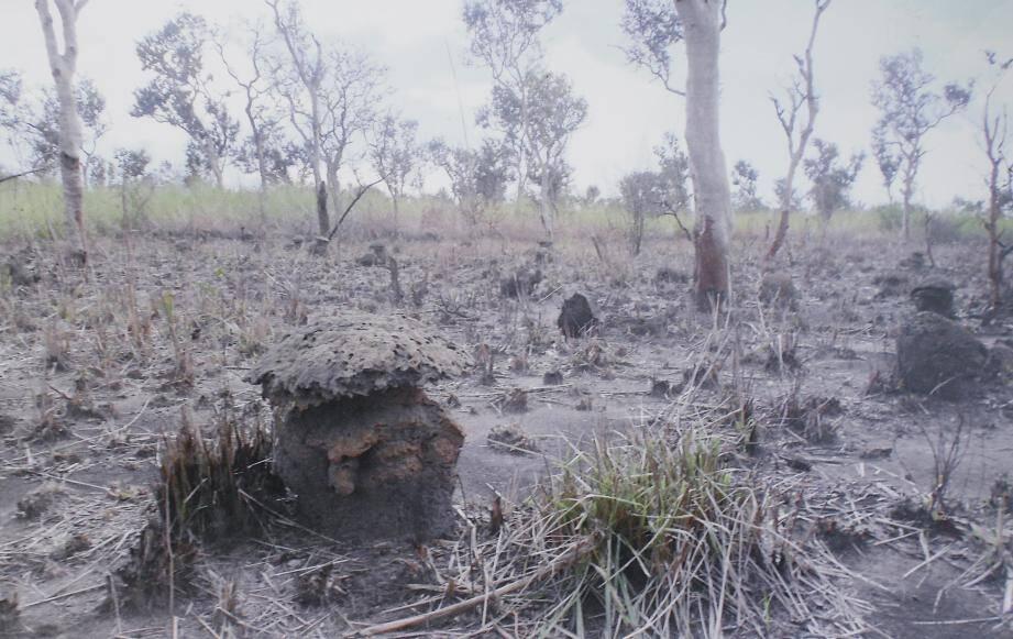 La déforestation tue le poumon vert de notre planète.