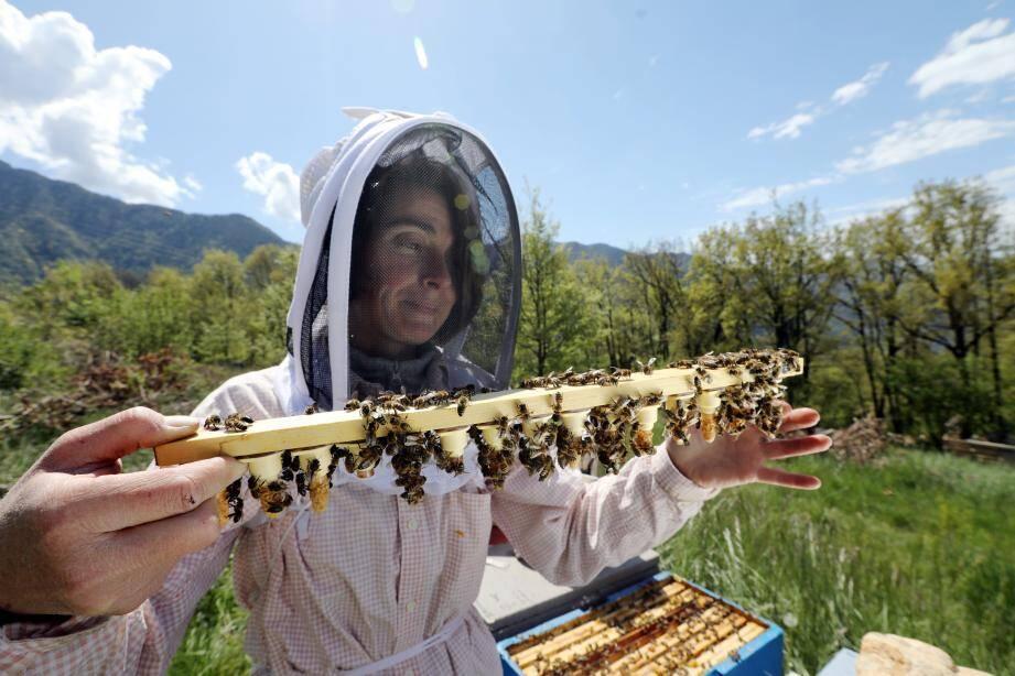 C'est sur cette barrette contenant des cocons qu'Alexandrine Brion a déposé une larve de reine. Sa croissance est assurée par les abeilles nourricières.