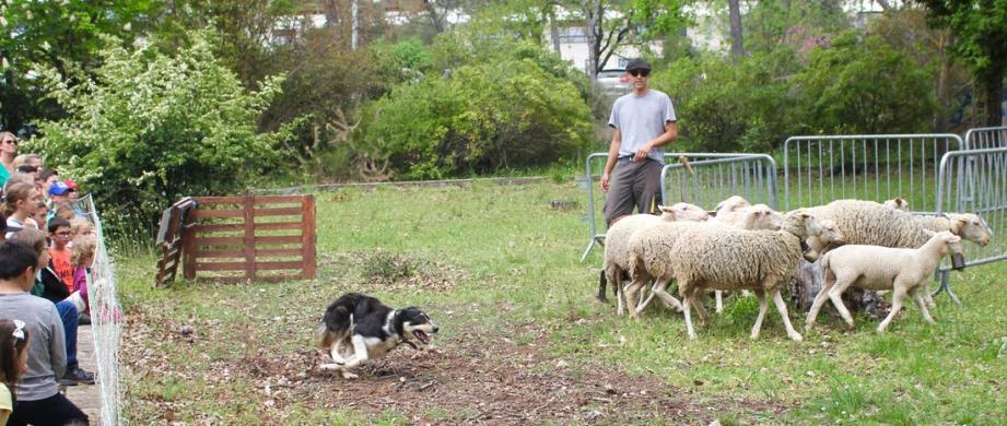 Rendez-vous dimanche de 9 h 30 à 17 heures au domaine de Peïjan, route de Biot, pour découvrir notamment la tonte des moutons.