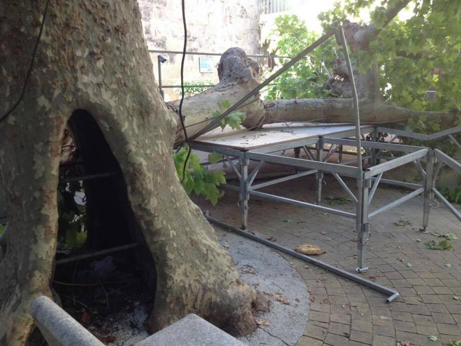 Sur la place du village, une branche colossale s'était arrachée du tronc. Soutenue par des étais, la base de ce platane centenaire était creuse.
