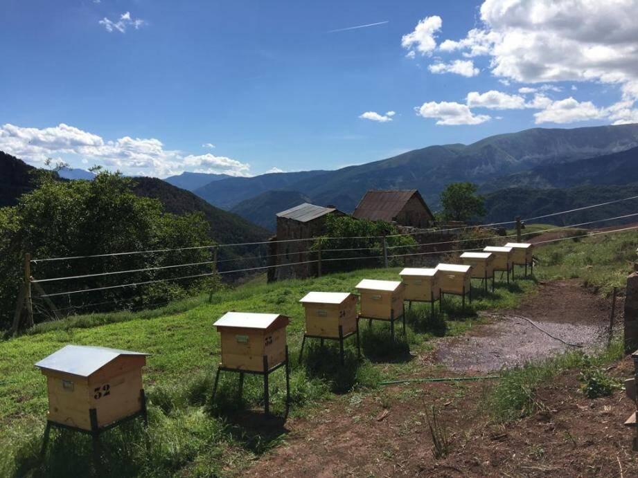 Les ruches des cinq apiculteurs sont réparties sur plusieurs communes à différentes altitudes. (DR)