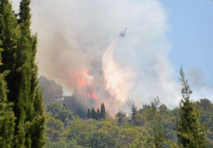 Les flammes ont ravagé la végétation.