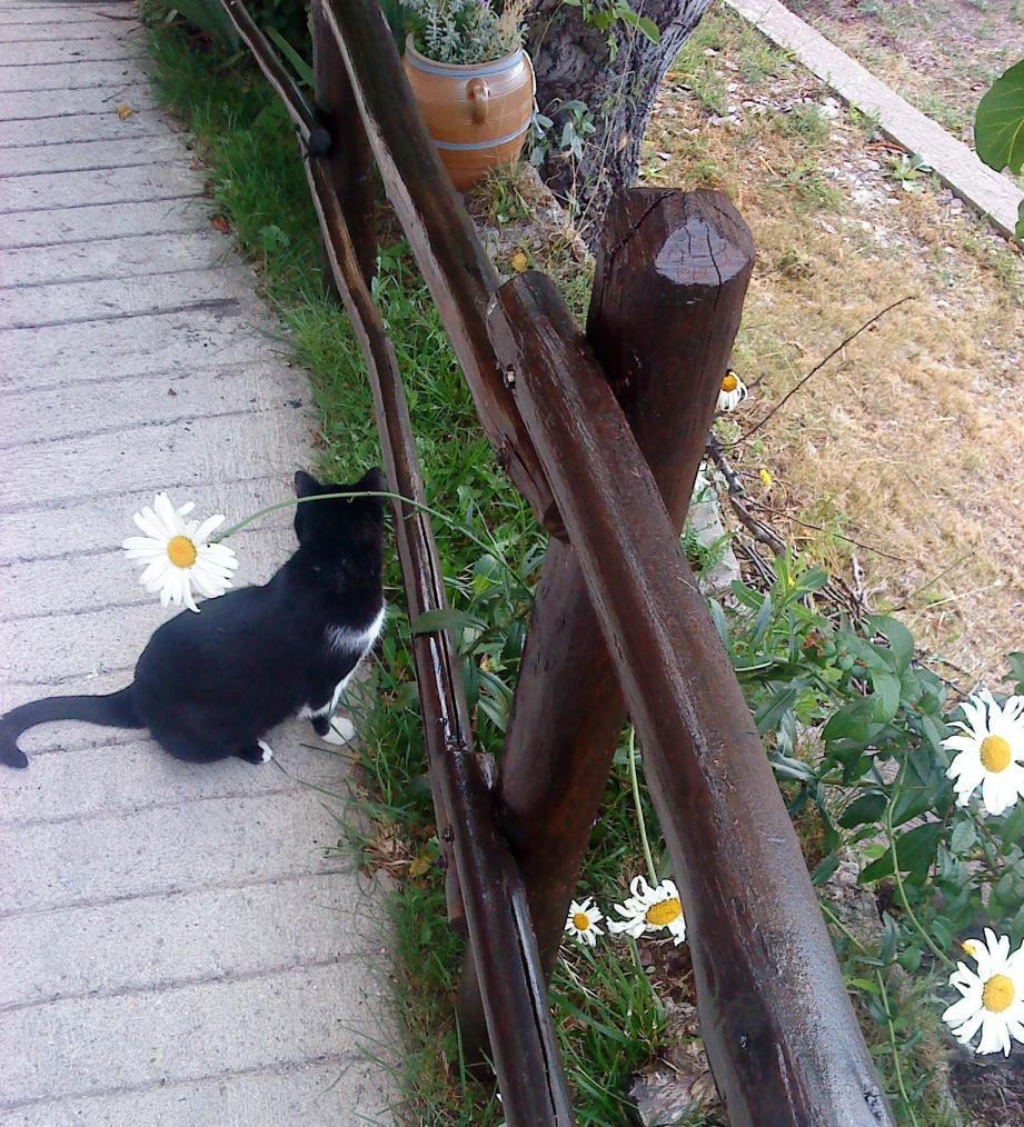 A Malaussène, un chat a essuyé un tir.