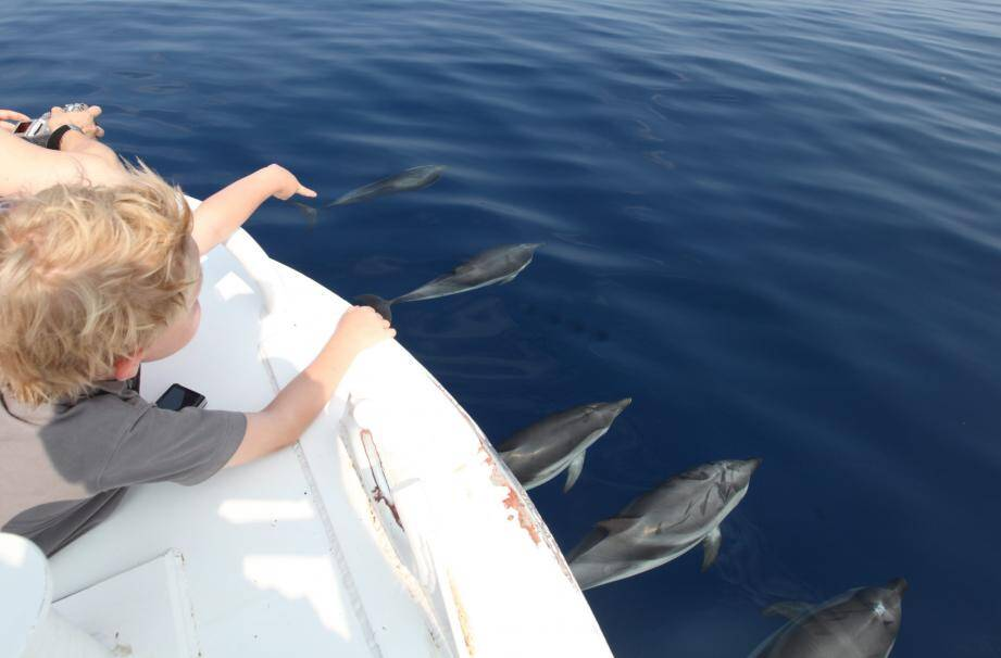 Balade en mer aux côtés des cétacés