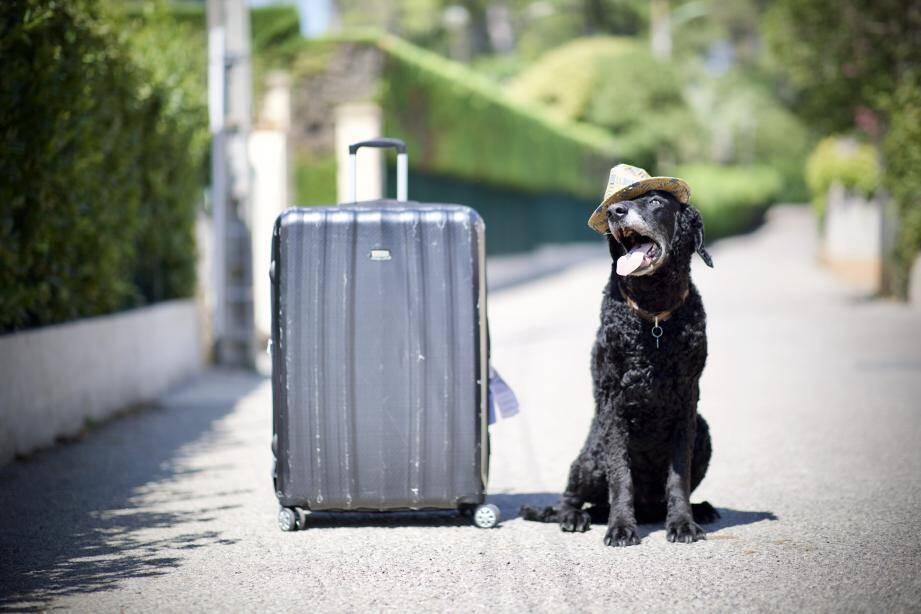En réservant, mieux vaut demander à l'établissement les services proposés pour les animaux.