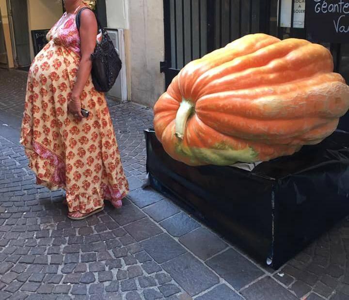 La courge de 304 kg exactement crée l'attraction à Vence.