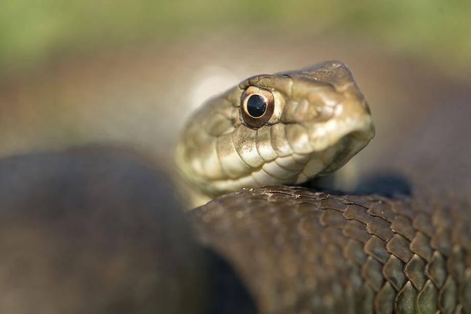 Plusieurs espèces de serpents ont été saisies chez un particulier à Antibes.