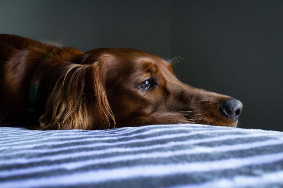 En cas de crise brutale, il est important de ne pas paniquer. Il faut calmer l'animal, lui parler doucement, le caresser et faire appel à un vétérinaire.