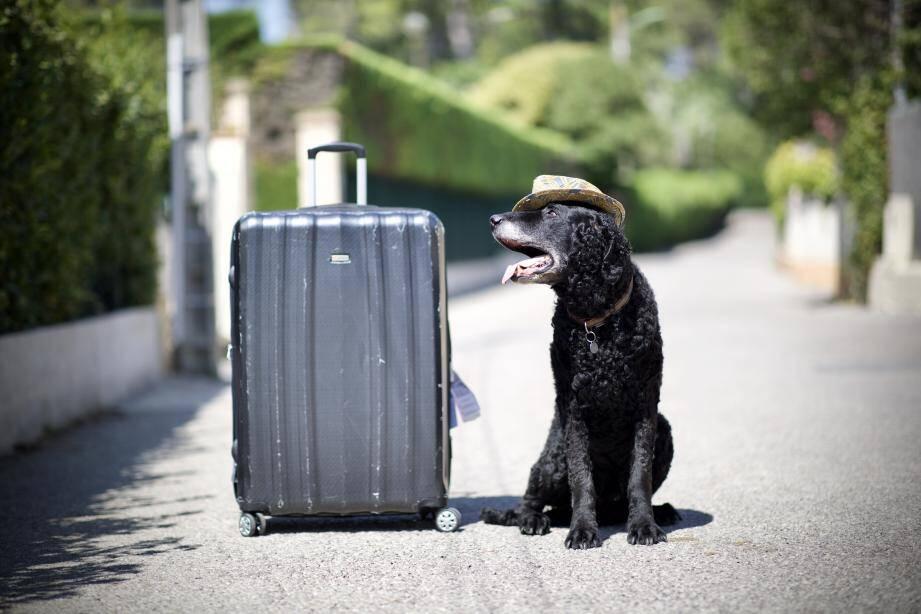 Partir avec son chien peut se révéler être un vrai casse-tête.