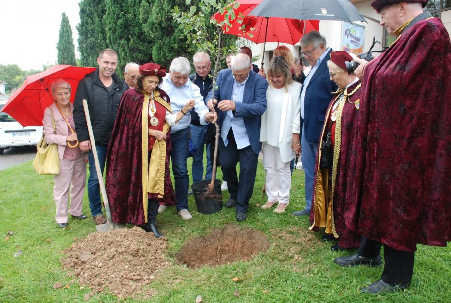 Didier Brémond, Marc Richard, Violaine Champagnac à l'unisson pour planter le prunier de Brignoles.