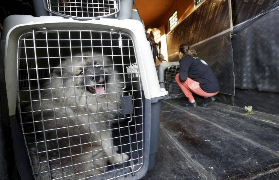 Dix chiens et deux chiots ont été saisis par la gendarmerie et les associations de défense des animaux.