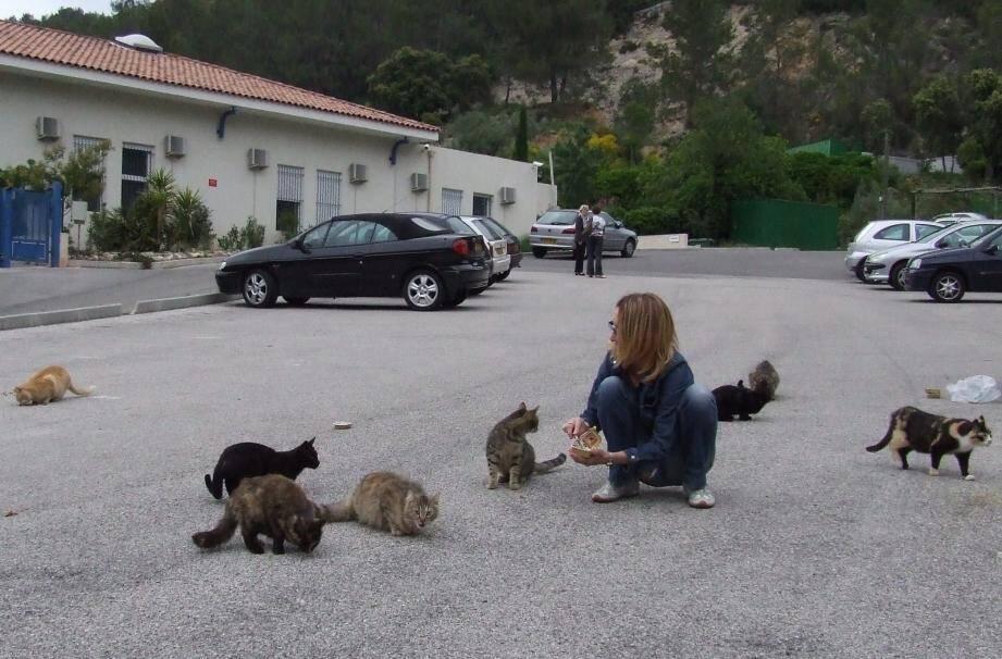 Danièle Cougourdan vient au secours des chats abandonnés sur l'un des sites toucassins.