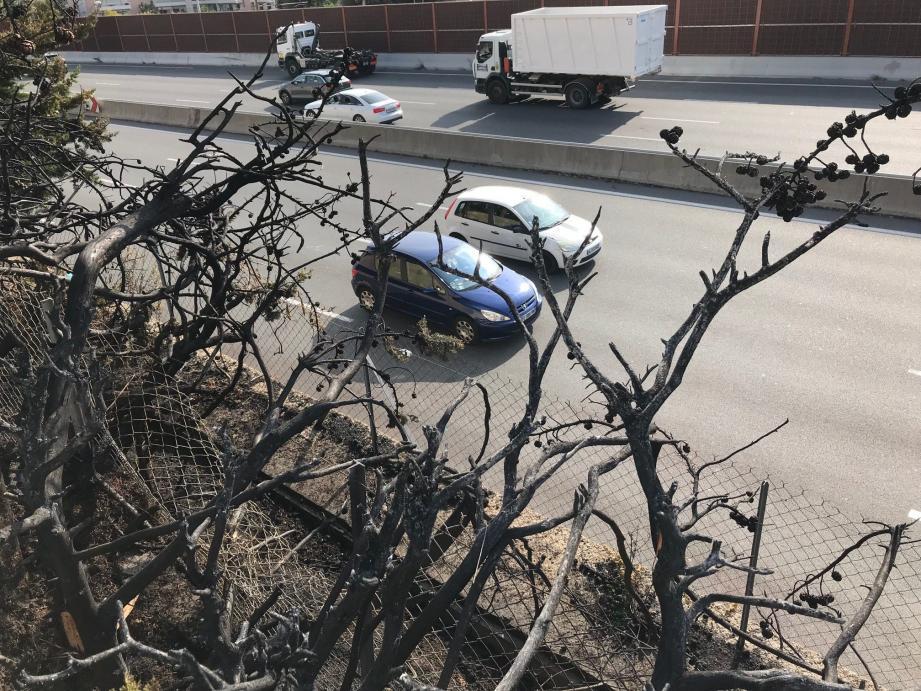 Les riverains ont laissé pousser les végétaux en bordure d'autoroute en attendant le mur antibruit promis.
