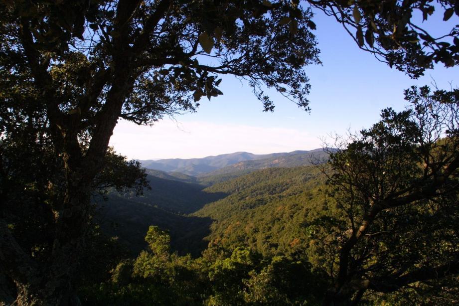 Les forêts collobrièroises ont fait l'objet de plusieurs inventaires qui se poursuivront l'an prochain.