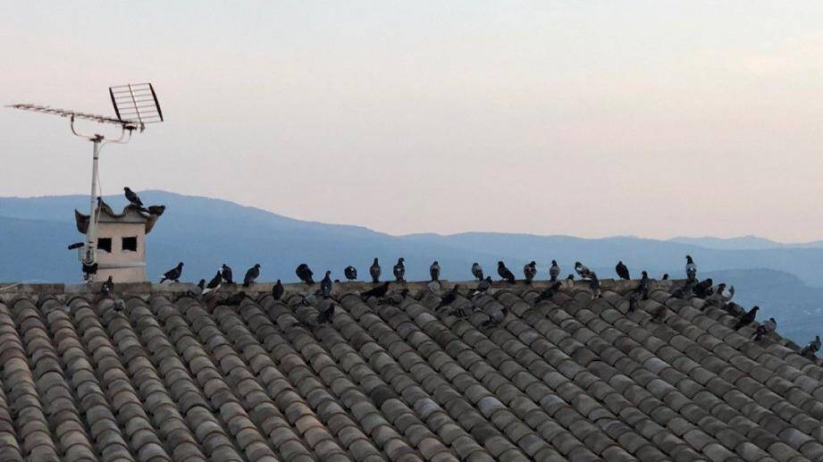 Des pigeons partout sur les toits du village.