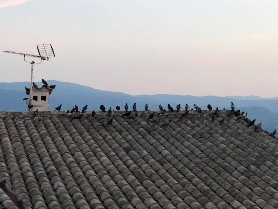 Des pigeons partout sur les toits du village.(DR)
