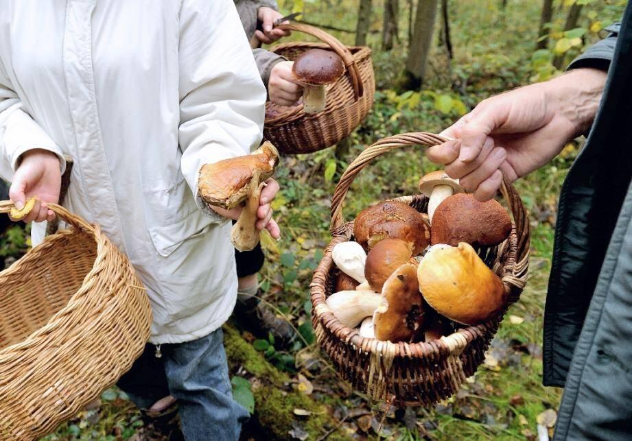 Des ramasseurs de champignons en forêt (photo d'illustration).
