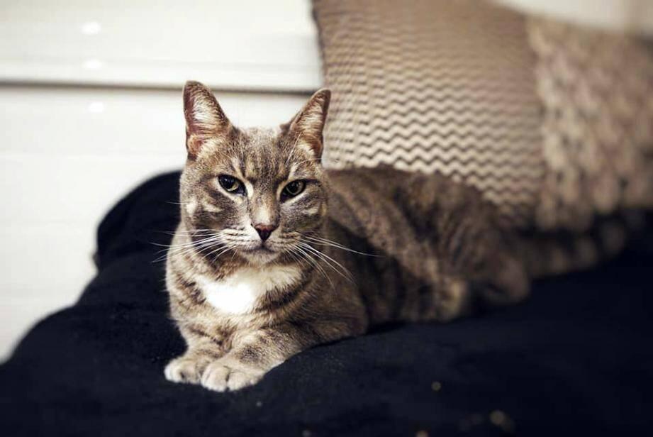 Qui veut récupérer le chat abandonné au MacDo de Saint-Maximin?