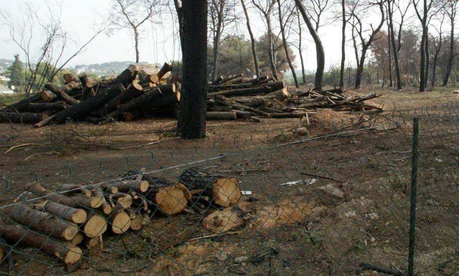 Un incendie a parcouru 10,3 hectares de forêt le 4 juillet 2007à Antibes.