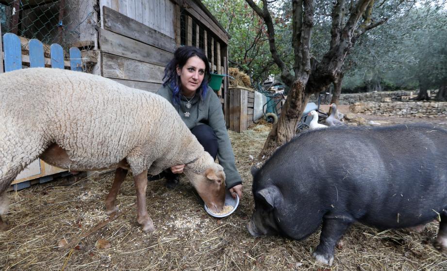 Aude Roux a créé l'association Terre de Soleil sur un grand site, à Saint-Cézaire-sur-Siagne. Entre 150 et 180 animaux y ont trouvé refuge.