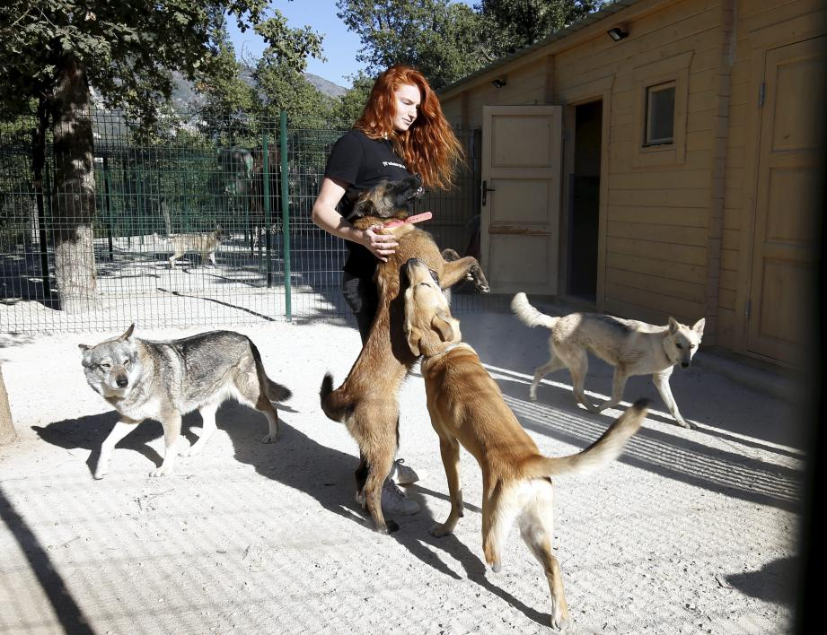 Chaque jour, les chiens évoluent dans un environnement sain au milieu de leurs congénères. La rééducation comportementale se fait à leur rythme.