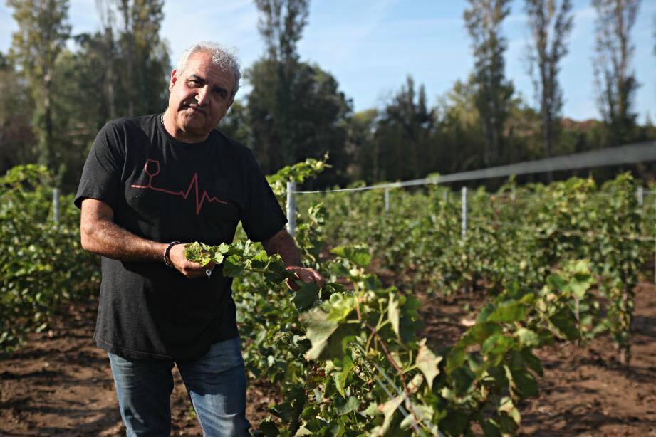 """Pierre Audemard a planté ses premiers cépages résistants au printemps dernier. Et les résultats sont """"plus qu'encourageants""""."""