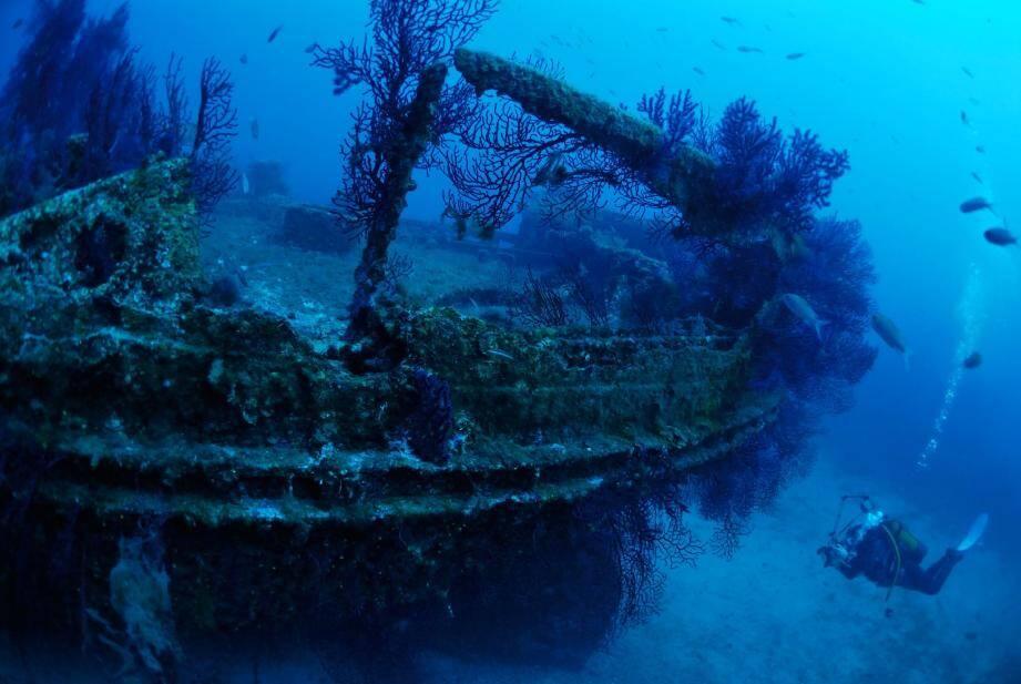 L'épave de l'Arroyo, à quelques mètres des Deux-Frères, est largement peuplée de gorgones.