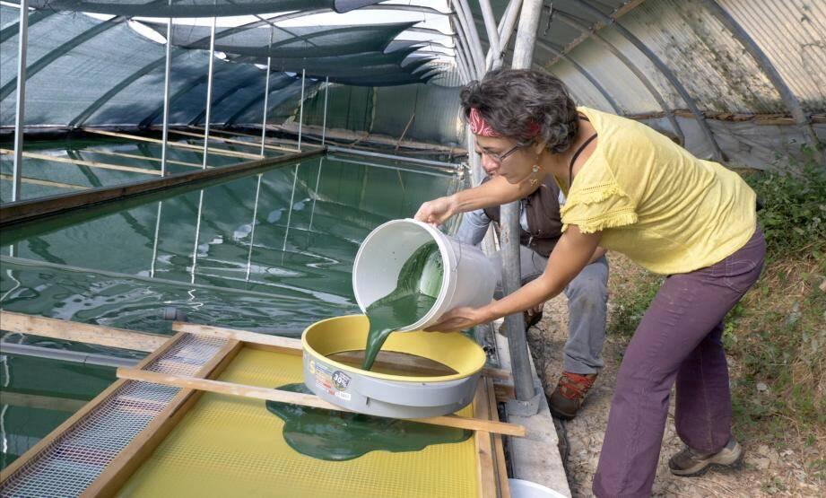 Muriel et Hervé Le Guennec ont changé de vie, pour cultiver la spiruline à Roquebillière.
