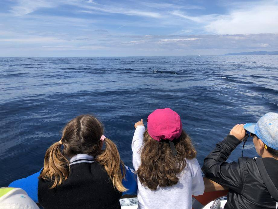 Outre de nombreuses actions, chaque année la commune organise pour ses écoliers, une sortie en mer pour observer les mammifères marins afin de les sensibiliser à la cause au plus près des sujets.