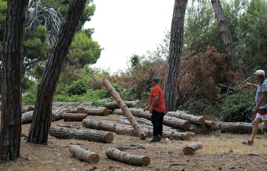 Les troncs d'arbre stockés en sécurité.