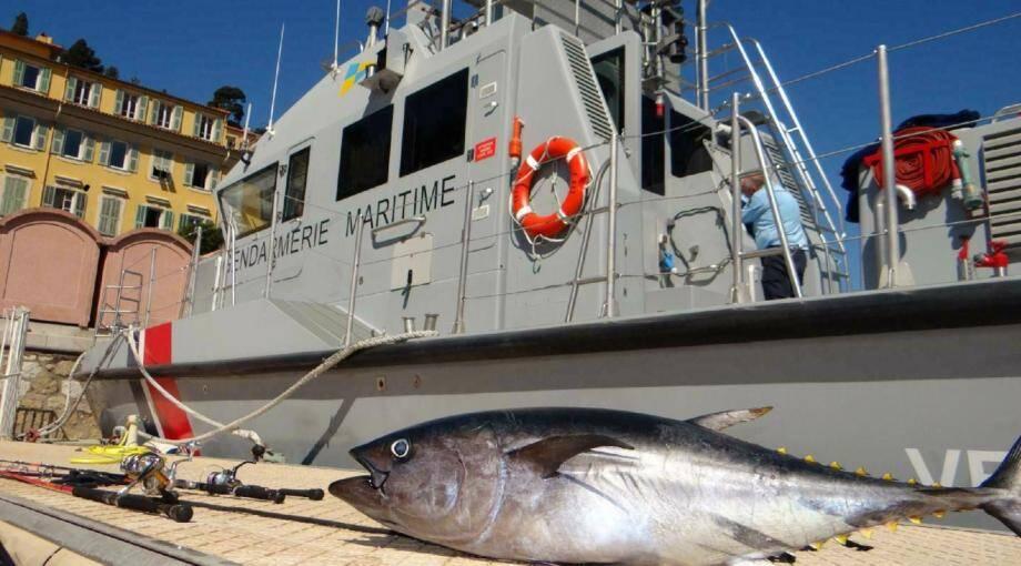 Illustration d'un thon rouge pêché illégalement.(DR)