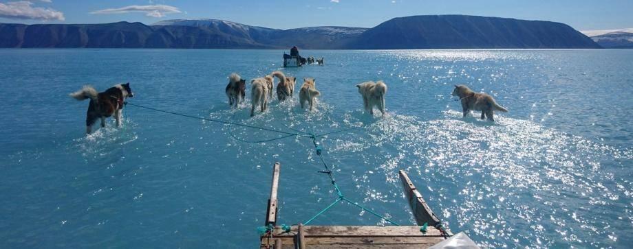 Le 17 juin au Groenland, les chiens de traîneau marchent sur l'eau.
