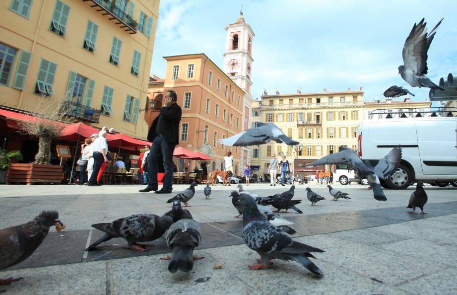 Les pigeons peuvent constituer une nuisance, mais la mairie de Nice dit non à leur gazage. Photo Franck Fernandes