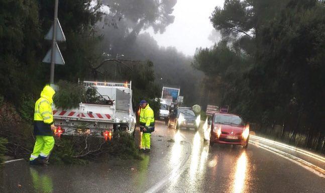 arbres et branchages sont susceptibles de tomber sur les voies, comme ici chemin Saint-Bernard à Vallauris.