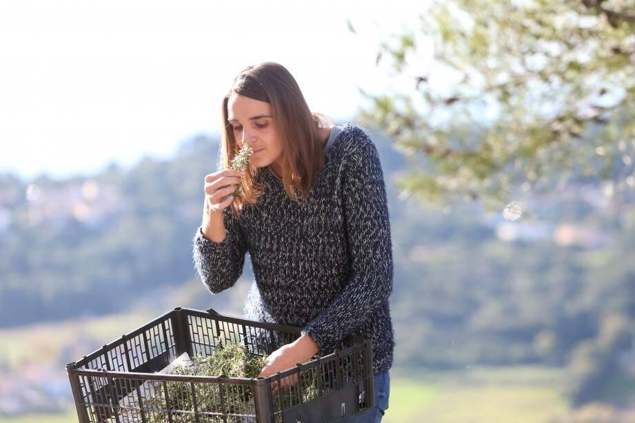 Le romarin cueilli dans la colline voisine sèche plusieurs jours.Il sera ensuiteutilisé pour un macérat