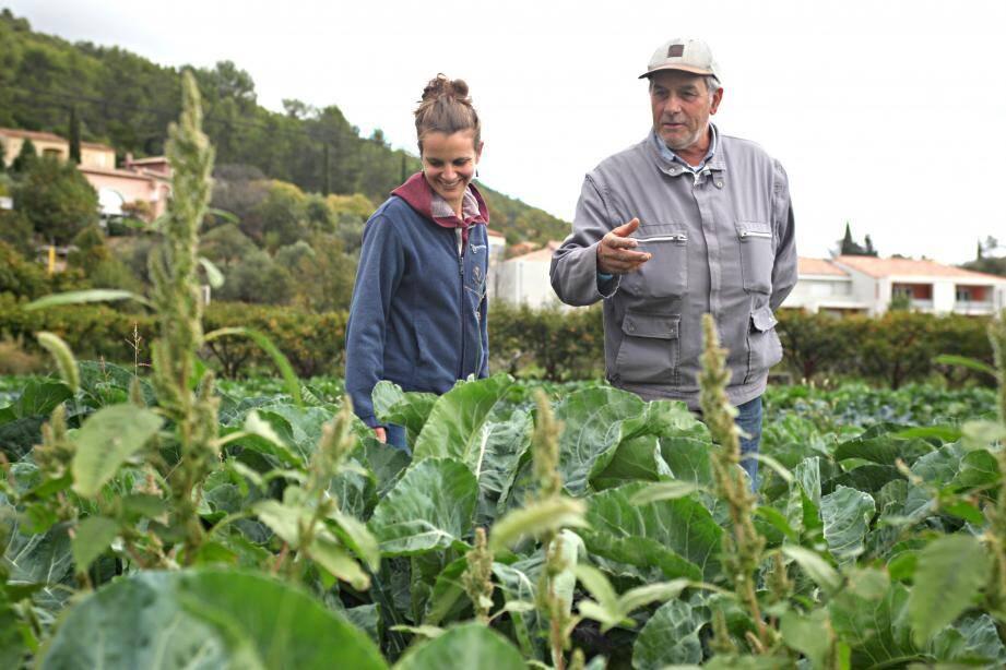 Le domaine Trucco à Solliès-Toucas qui s'est converti à l'agriculture bio.