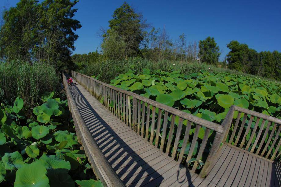L'étang de Fontmerle à Mougins.