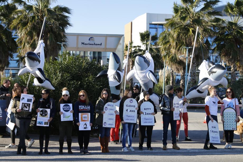 Massés devant l'hôtel du parc animalier, les manifestants dénoncent le futur transfert des quatre orques vers un parc chinois.